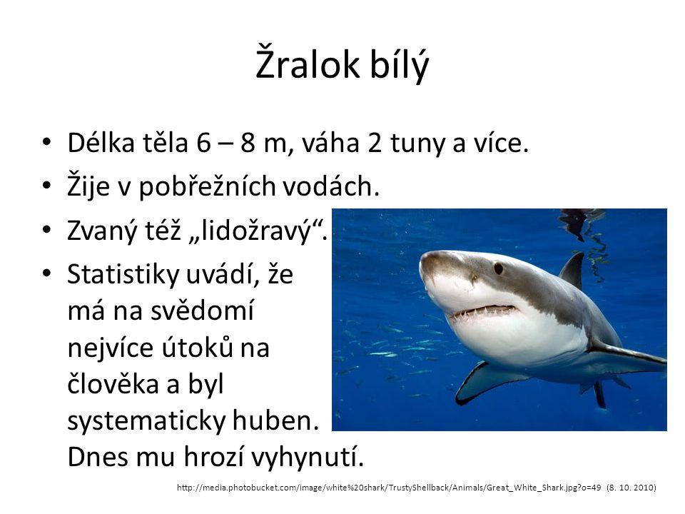 Žralok bílý Délka těla 6 – 8 m, váha 2 tuny a více.
