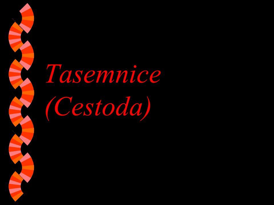 Tasemnice (Cestoda)
