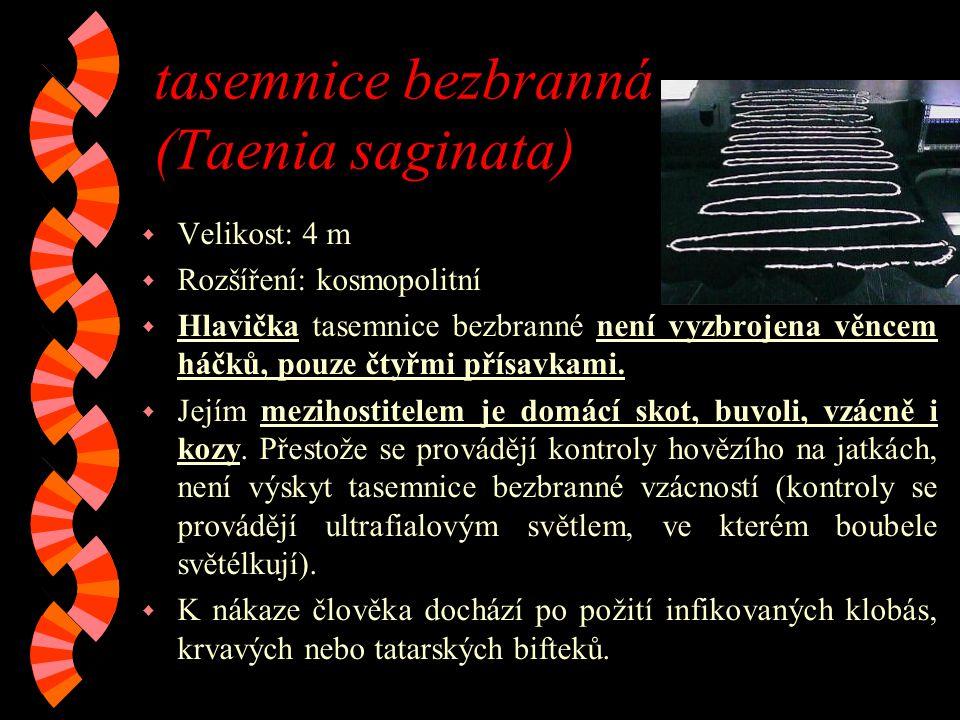 tasemnice bezbranná (Taenia saginata)
