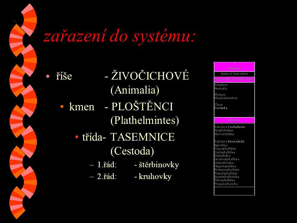 zařazení do systému: říše - ŽIVOČICHOVÉ (Animalia)