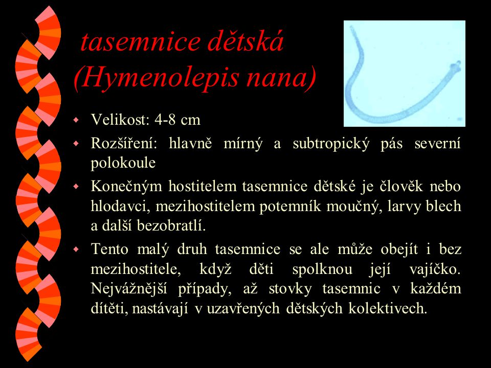 tasemnice dětská (Hymenolepis nana)