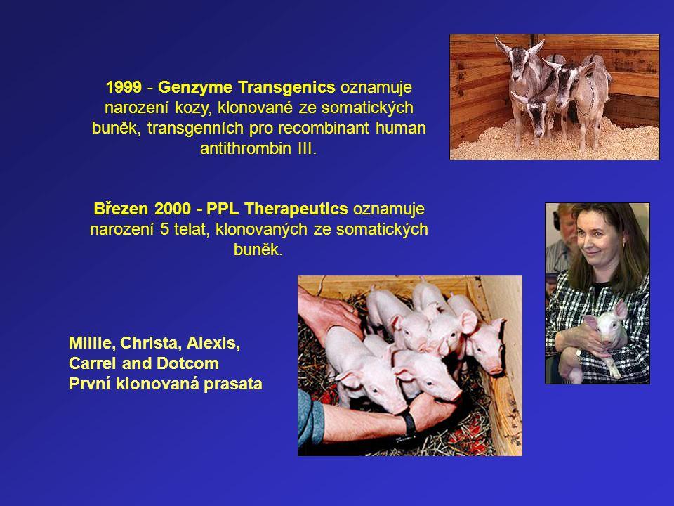 1999 - Genzyme Transgenics oznamuje narození kozy, klonované ze somatických buněk, transgenních pro recombinant human antithrombin III.