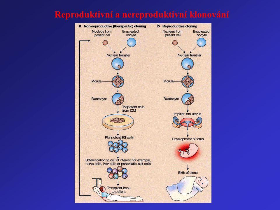 Reproduktivní a nereproduktivní klonování