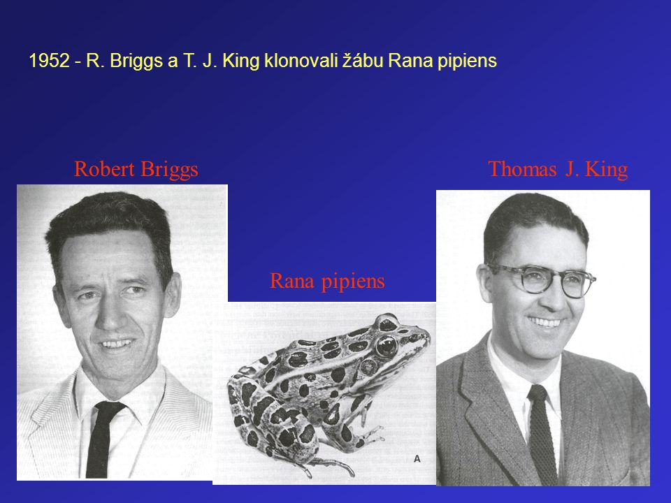 Robert Briggs Thomas J. King Rana pipiens