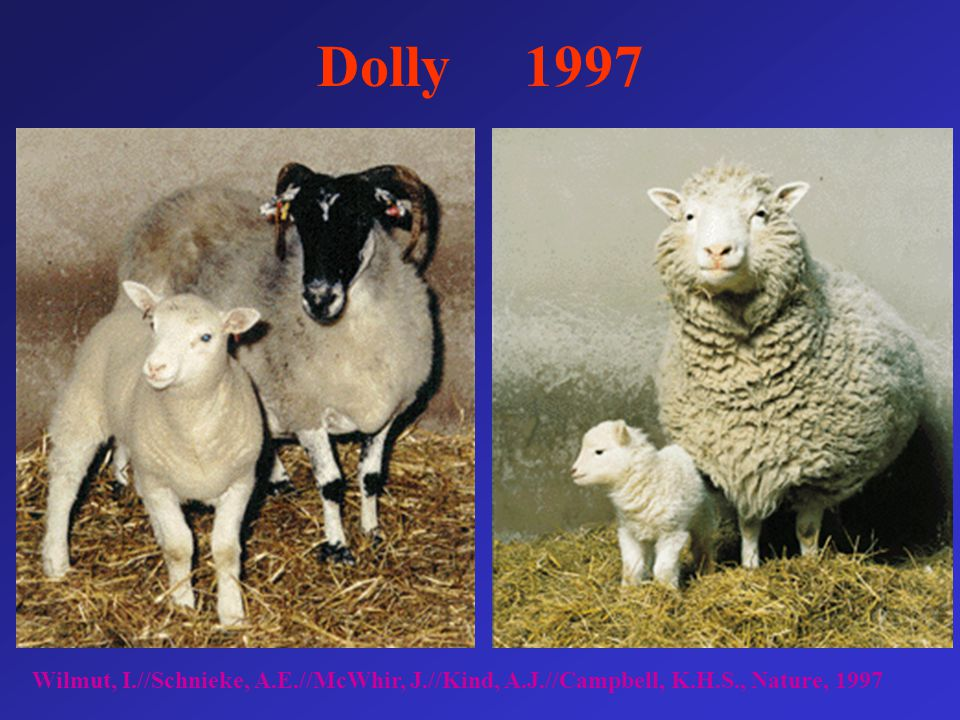 Dolly 1997 Wilmut, I.//Schnieke, A.E.//McWhir, J.//Kind, A.J.//Campbell, K.H.S., Nature, 1997