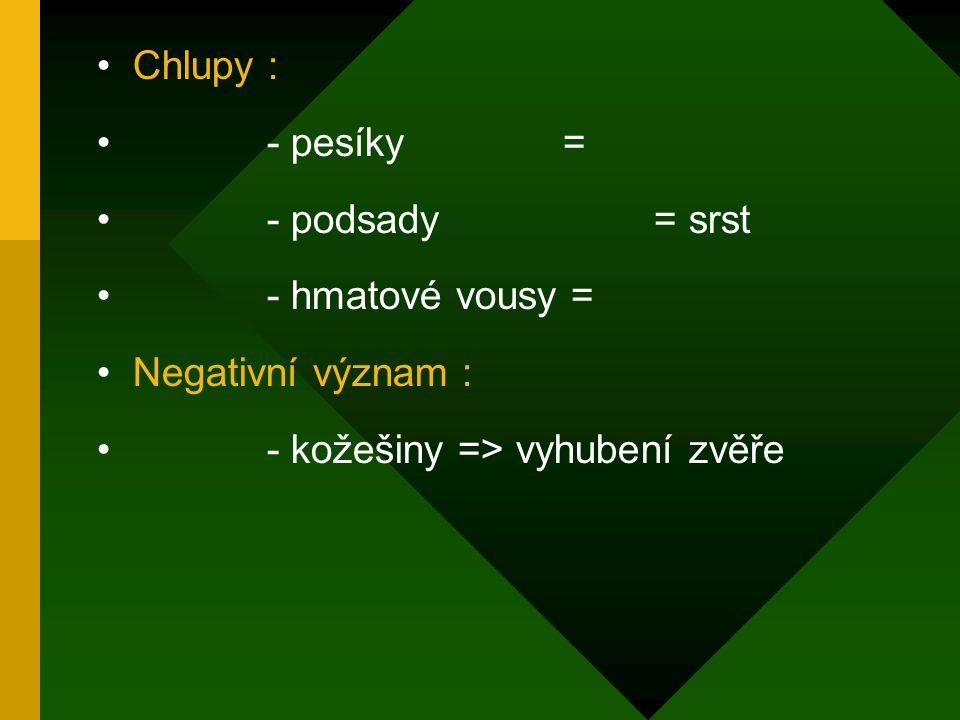 Chlupy : - pesíky = - podsady = srst. - hmatové vousy = Negativní význam :