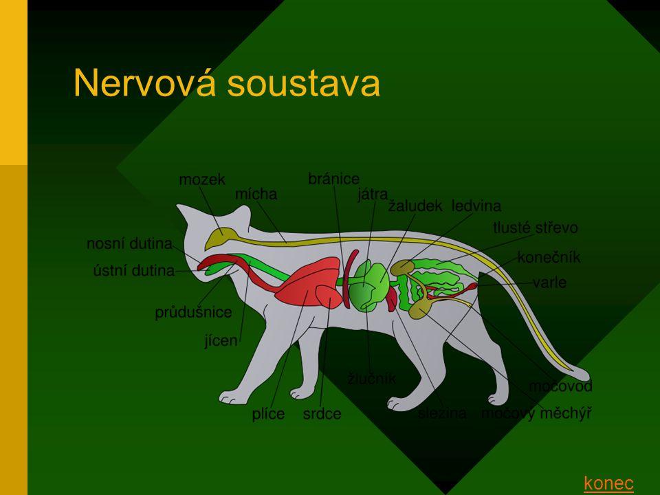 Nervová soustava konec