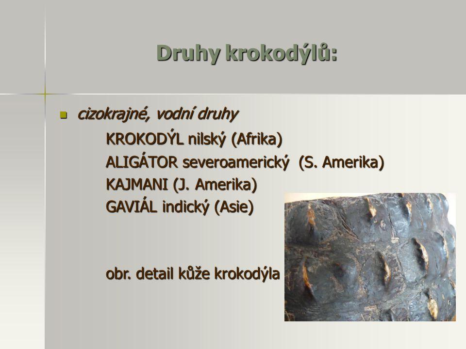Druhy krokodýlů: KROKODÝL nilský (Afrika) cizokrajné, vodní druhy
