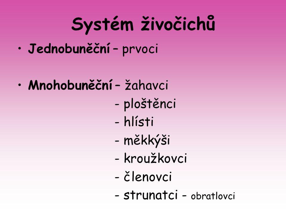 Systém živočichů Jednobuněční – prvoci Mnohobuněční – žahavci