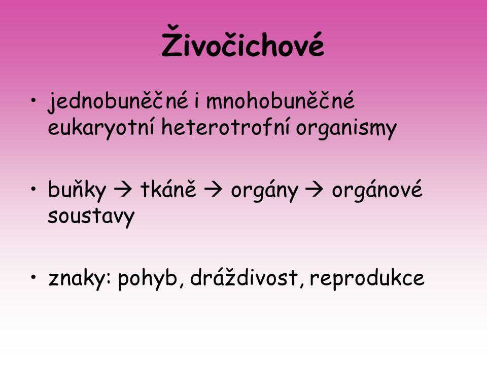 Živočichové jednobuněčné i mnohobuněčné eukaryotní heterotrofní organismy. buňky  tkáně  orgány  orgánové soustavy.