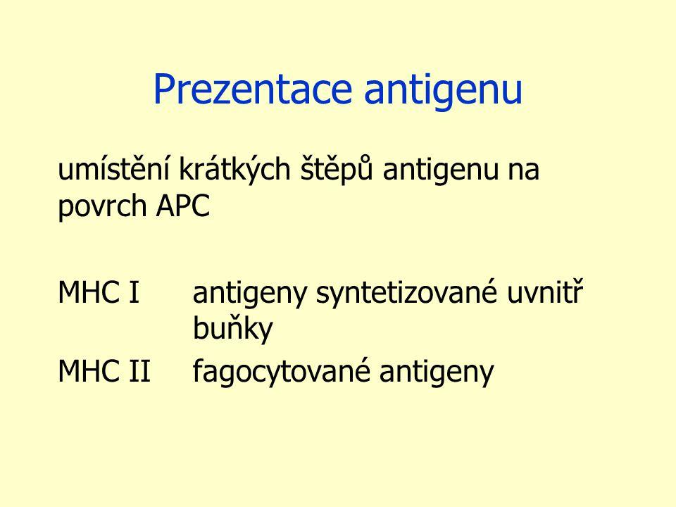 Prezentace antigenu umístění krátkých štěpů antigenu na povrch APC