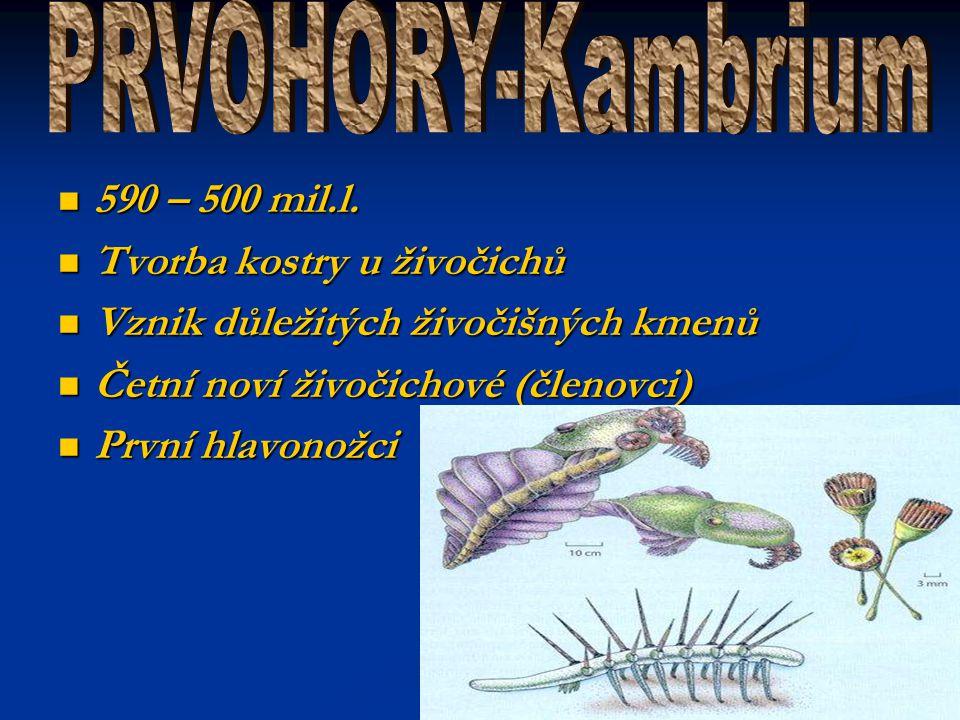 PRVOHORY-Kambrium 590 – 500 mil.l. Tvorba kostry u živočichů