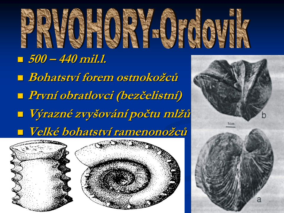 PRVOHORY-Ordovik 500 – 440 mil.l. Bohatství forem ostnokožců