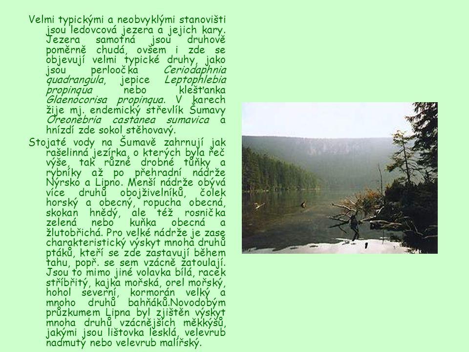 Velmi typickými a neobvyklými stanovišti jsou ledovcová jezera a jejich kary. Jezera samotná jsou druhově poměrně chudá, ovšem i zde se objevují velmi typické druhy, jako jsou perloočka Ceriodaphnia quadrangula, jepice Leptophlebia propinqua nebo klešťanka Glaenocorisa propinqua. V karech žije mj. endemický střevlík Šumavy Oreonebria castanea sumavica a hnízdí zde sokol stěhovavý.