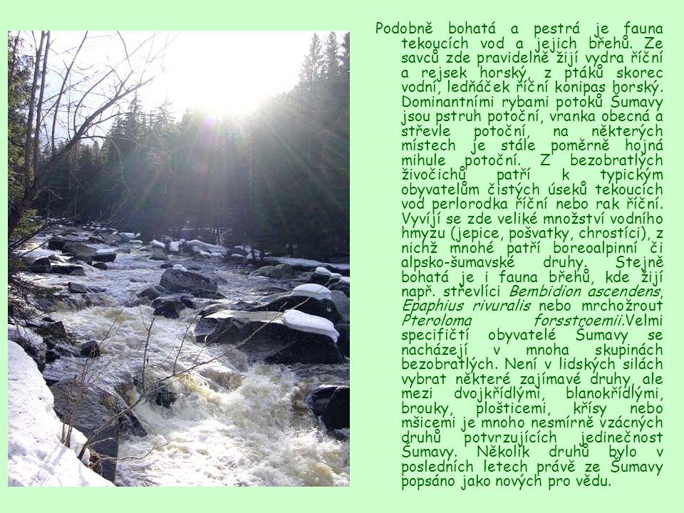 Podobně bohatá a pestrá je fauna tekoucích vod a jejich břehů