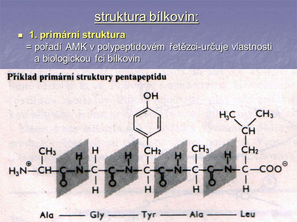 struktura bílkovin: 1. primární struktura