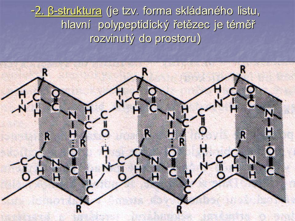 2. β-struktura (je tzv.