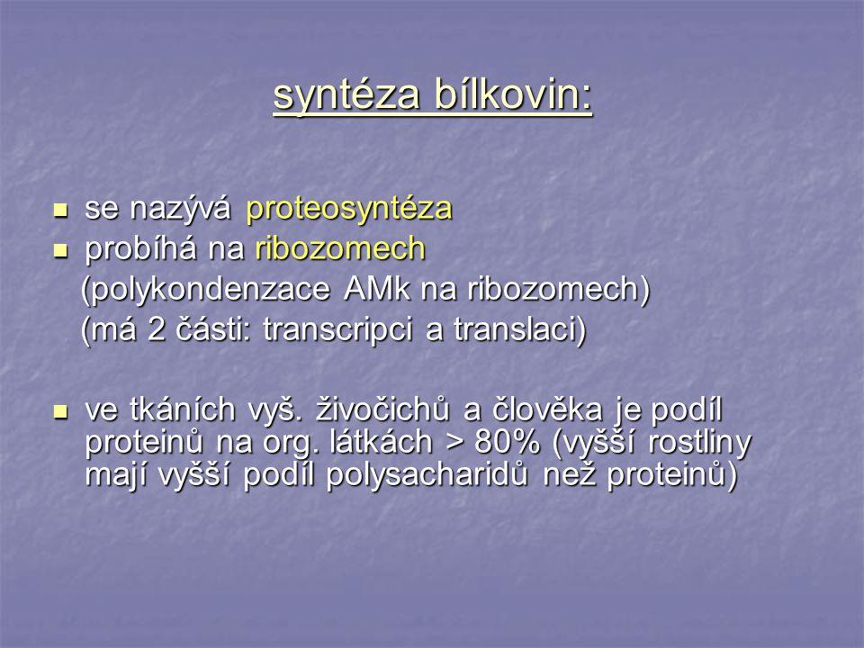 syntéza bílkovin: se nazývá proteosyntéza probíhá na ribozomech