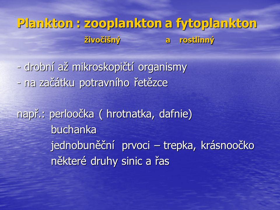 Plankton : zooplankton a fytoplankton živočišný a rostlinný