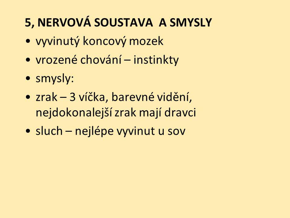 5, NERVOVÁ SOUSTAVA A SMYSLY