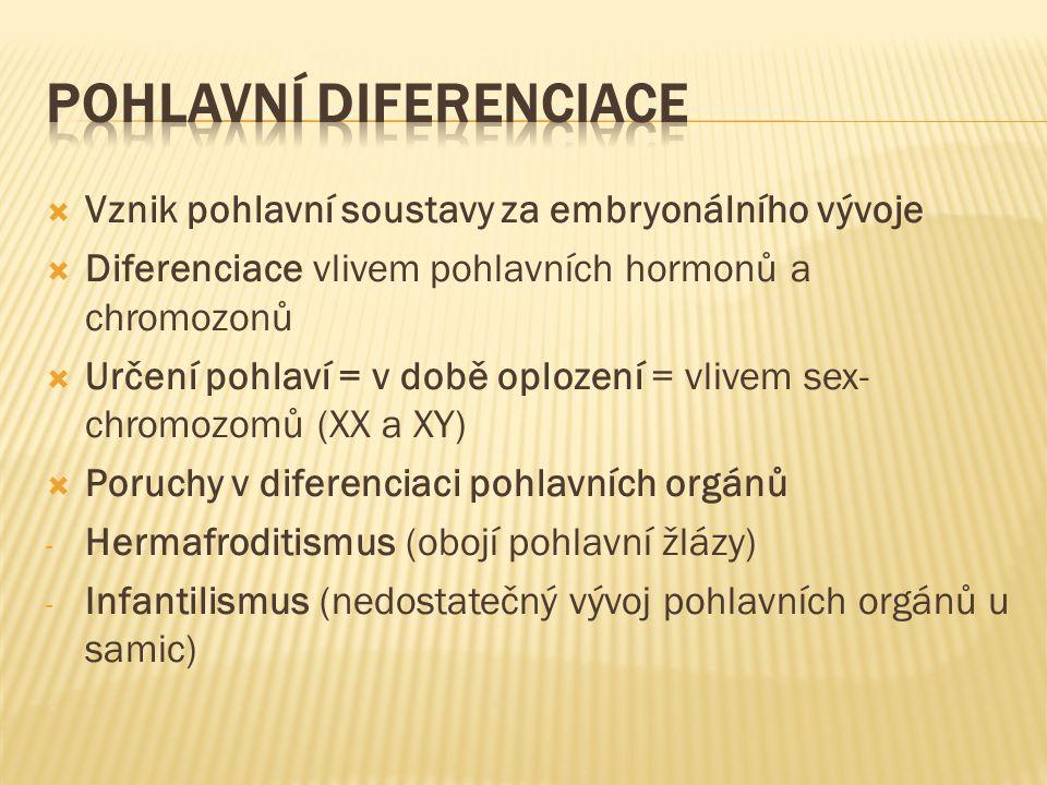 Pohlavní diferenciace