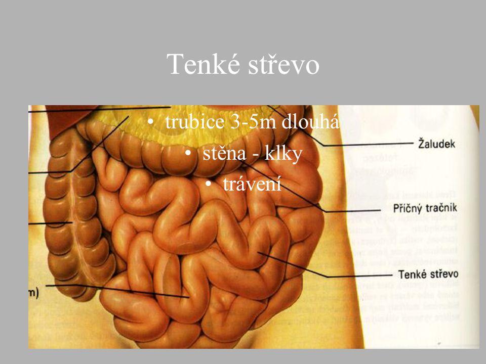 Tenké střevo trubice 3-5m dlouhá stěna - klky trávení