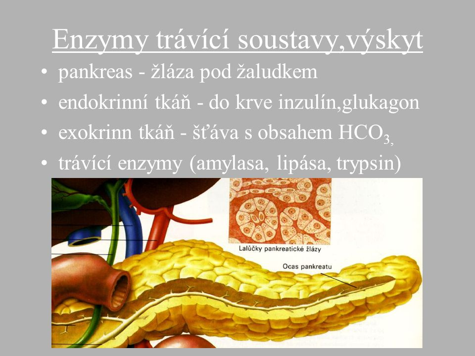 Enzymy trávící soustavy,výskyt