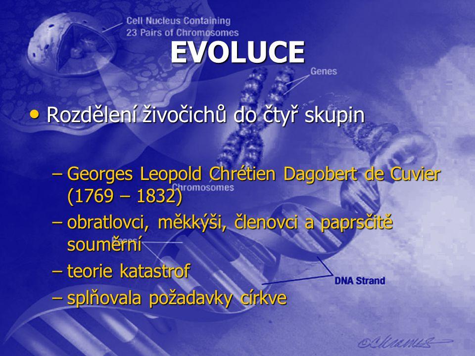 EVOLUCE Rozdělení živočichů do čtyř skupin