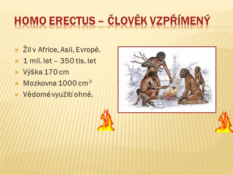 Homo erectus – člověk vzpřímený