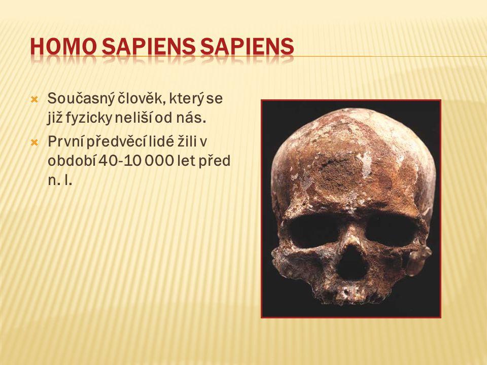 Homo sapiens sapiens Současný člověk, který se již fyzicky neliší od nás.