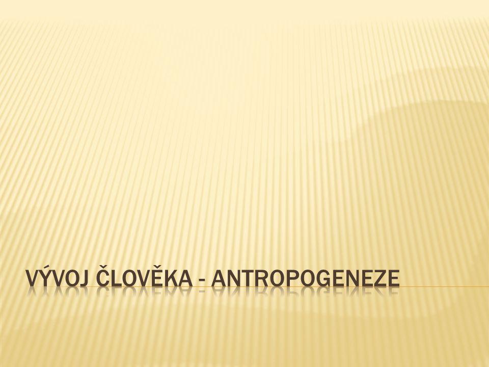 vývoj člověka - antropogeneze