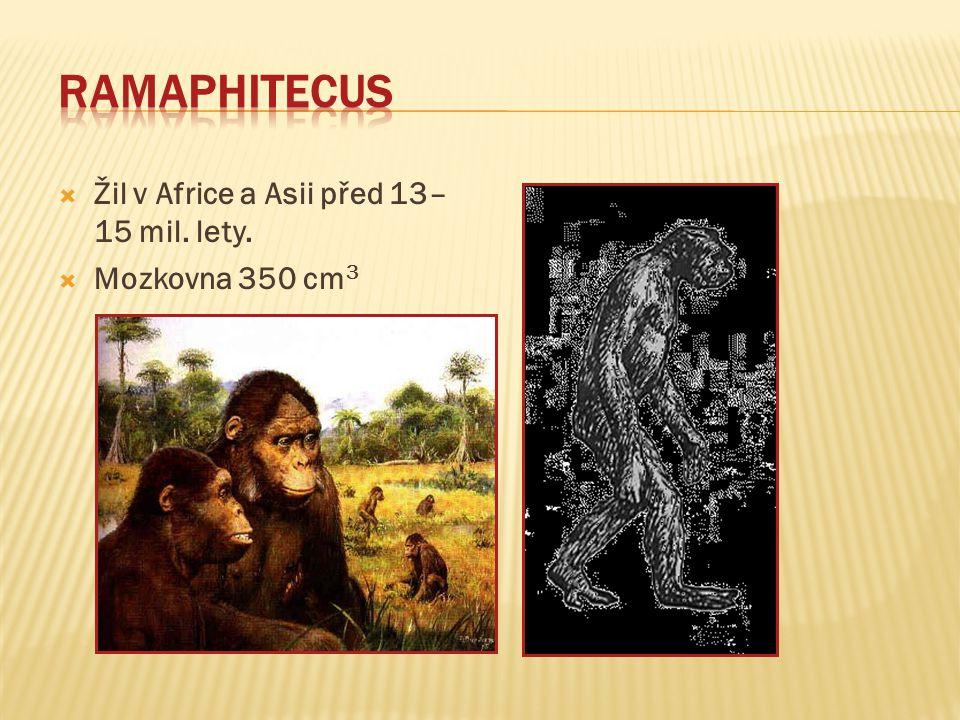 Ramaphitecus Žil v Africe a Asii před 13–15 mil. lety.
