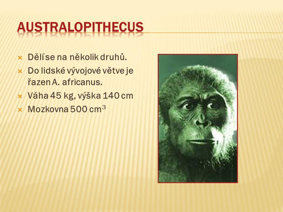 Australopithecus Dělí se na několik druhů.
