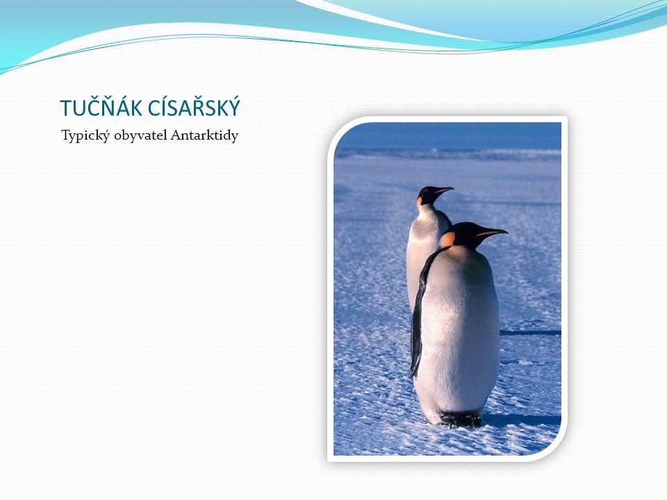 Typický obyvatel Antarktidy