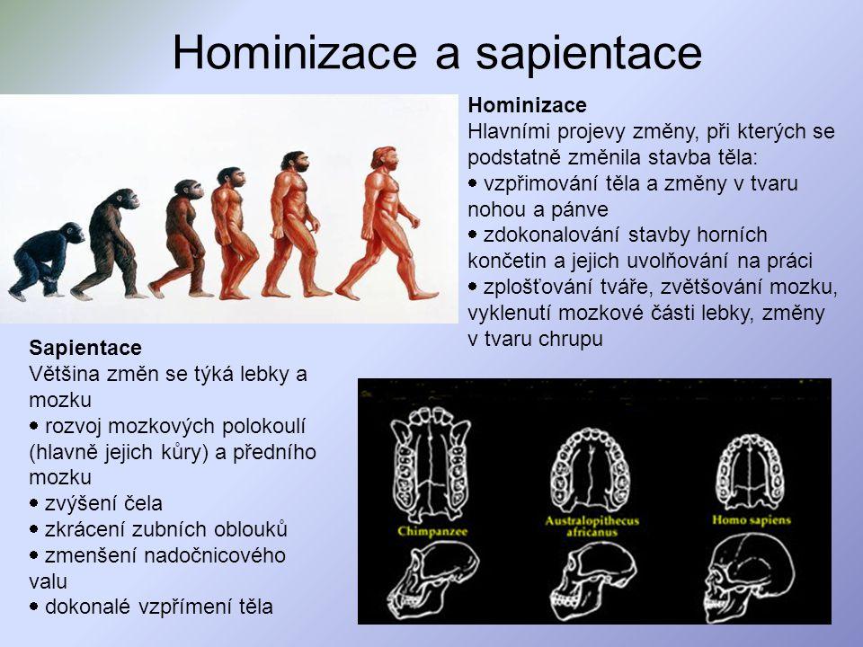 Hominizace a sapientace