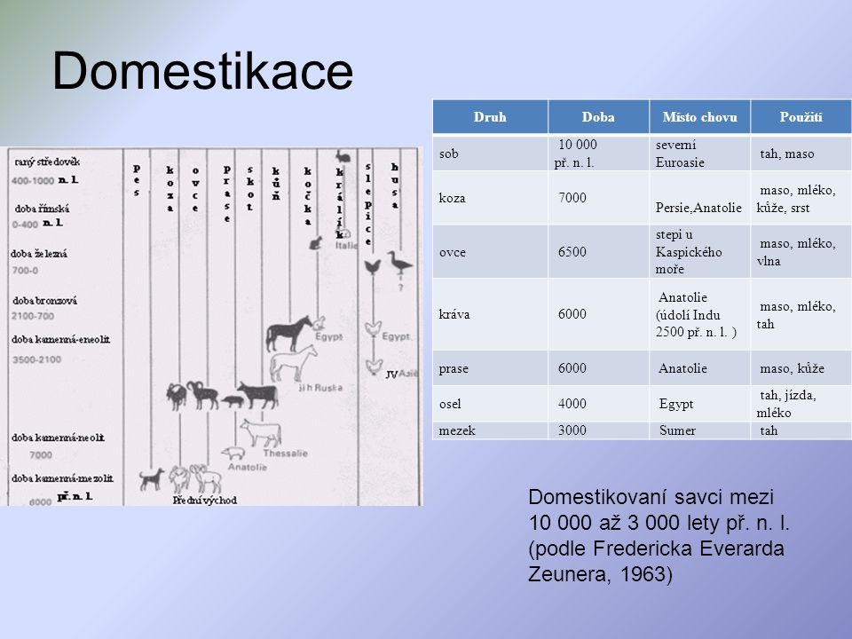 Domestikace Druh. Doba. Místo chovu. Použití. sob. 10 000 př. n. l. severní Euroasie. tah, maso.