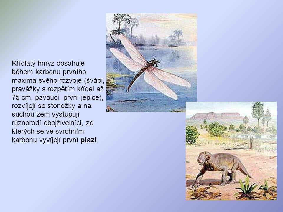 Křídlatý hmyz dosahuje během karbonu prvního maxima svého rozvoje (švábi, pravážky s rozpětím křídel až 75 cm, pavouci, první jepice), rozvíjejí se stonožky a na suchou zem vystupují různorodí obojživelníci, ze kterých se ve svrchním karbonu vyvíjejí první plazi.