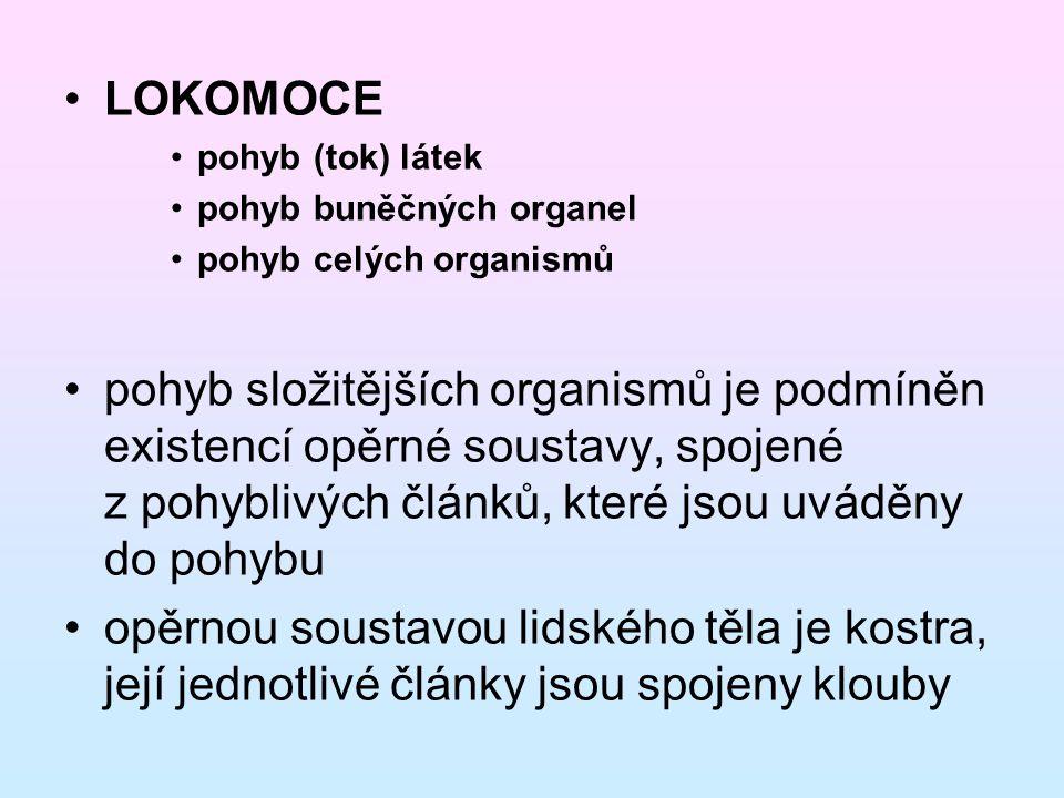 LOKOMOCE pohyb (tok) látek. pohyb buněčných organel. pohyb celých organismů.