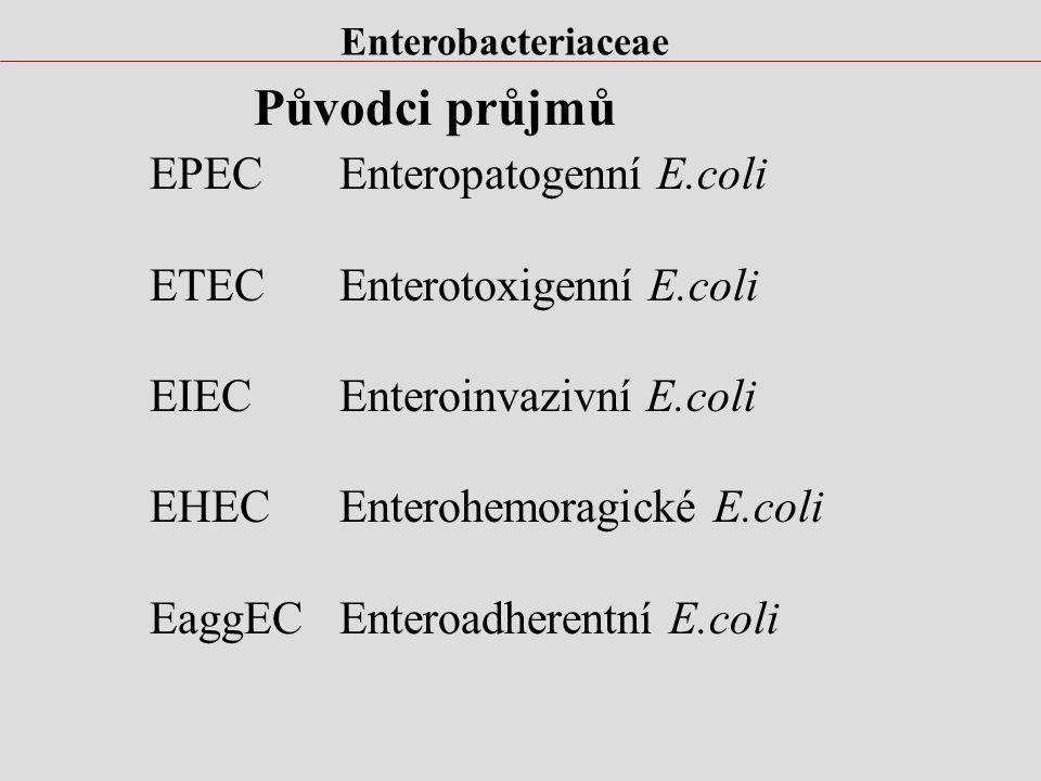 Původci průjmů EPEC Enteropatogenní E.coli ETEC Enterotoxigenní E.coli