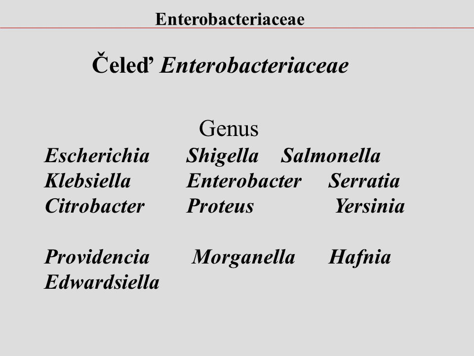 Čeleď Enterobacteriaceae