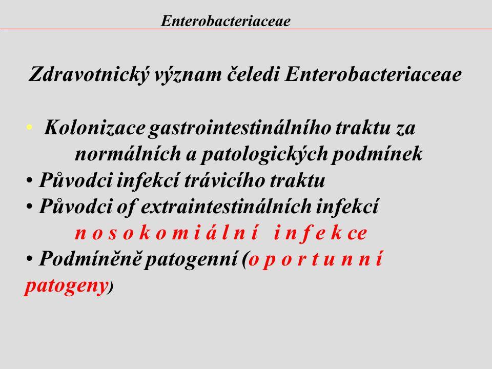 Zdravotnický význam čeledi Enterobacteriaceae