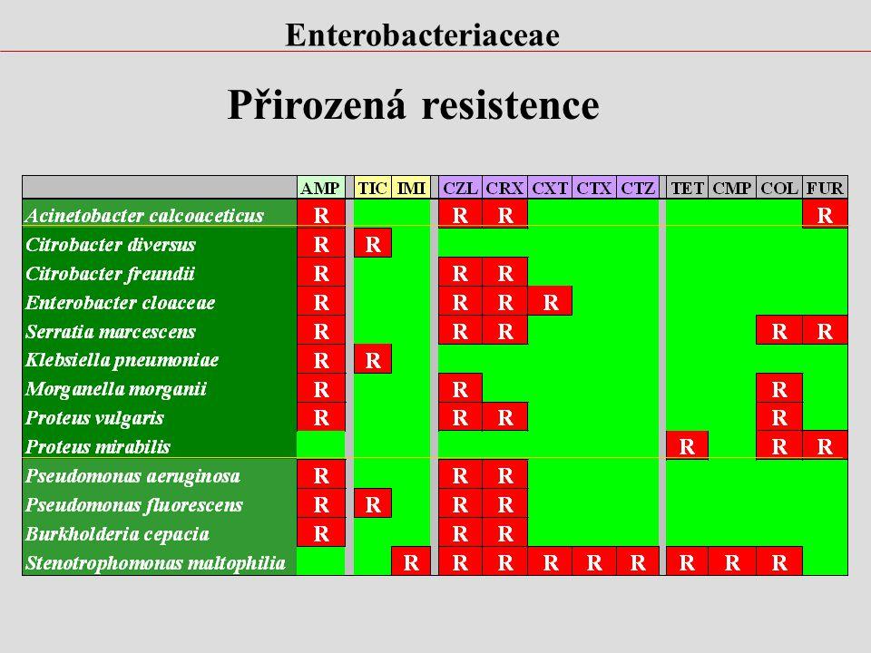 Enterobacteriaceae Přirozená resistence
