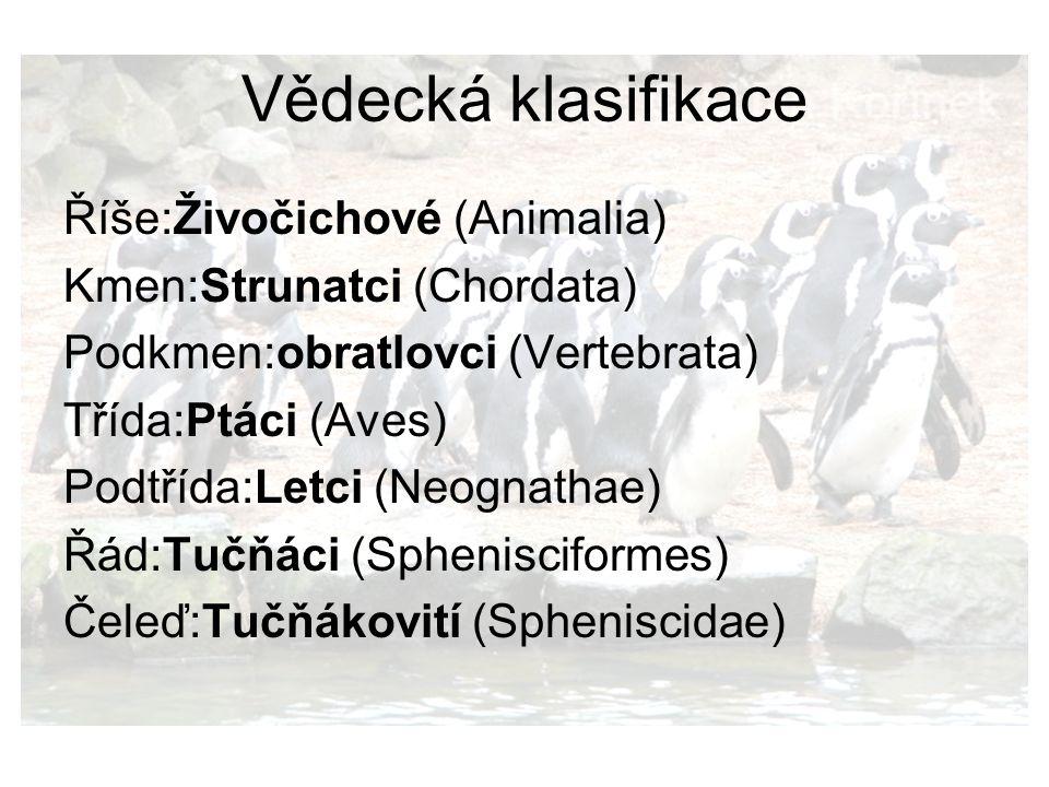 Vědecká klasifikace Říše:Živočichové (Animalia)