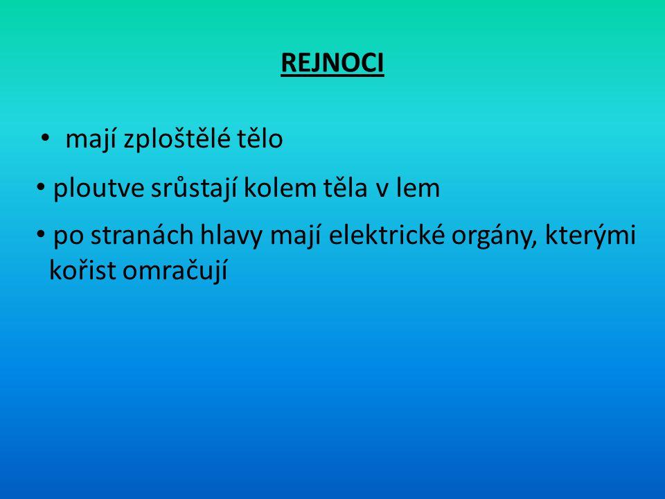 REJNOCI mají zploštělé tělo. ploutve srůstají kolem těla v lem. po stranách hlavy mají elektrické orgány, kterými.