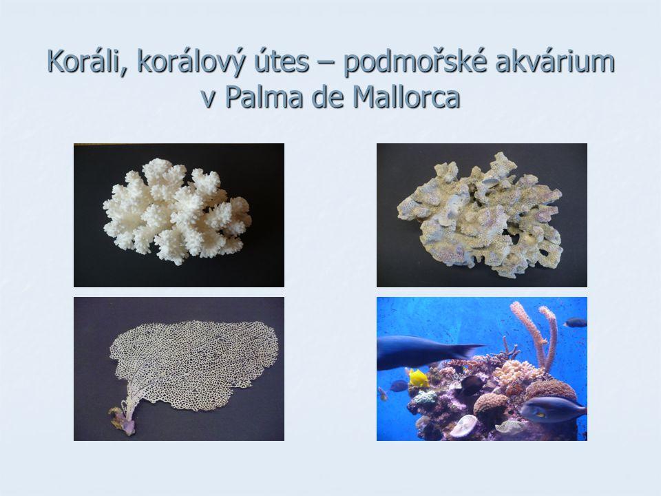 Koráli, korálový útes – podmořské akvárium v Palma de Mallorca