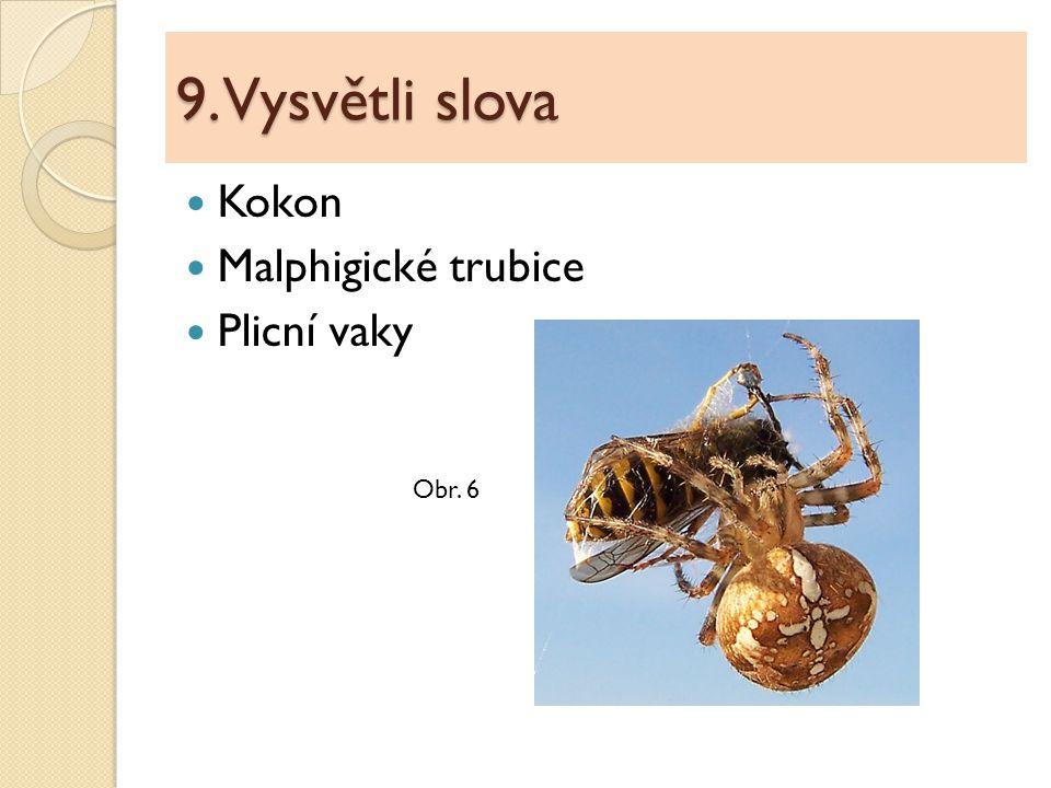 9. Vysvětli slova Kokon Malphigické trubice Plicní vaky Obr. 6