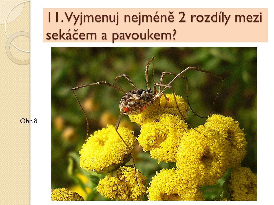 11. Vyjmenuj nejméně 2 rozdíly mezi sekáčem a pavoukem