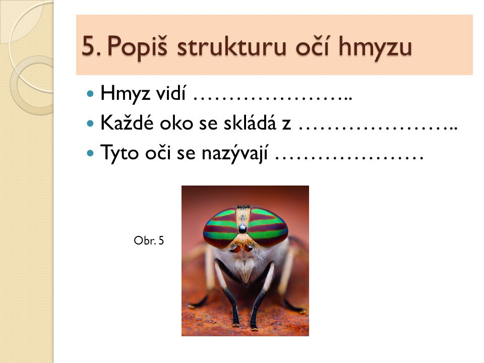 5. Popiš strukturu očí hmyzu