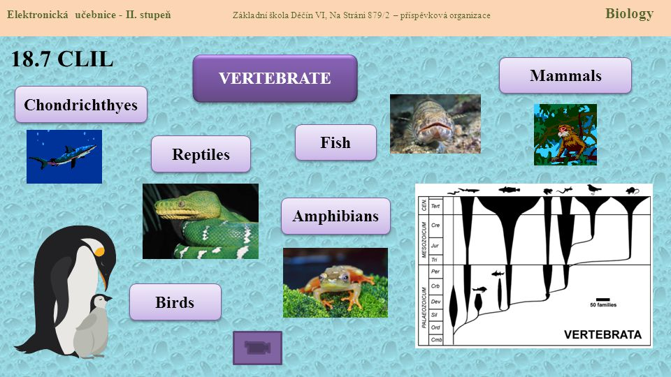 18.7 CLIL VERTEBRATE Mammals Chondrichthyes Fish Reptiles Amphibians