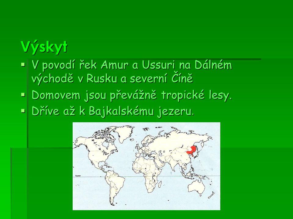 Výskyt V povodí řek Amur a Ussuri na Dálném východě v Rusku a severní Číně. Domovem jsou převážně tropické lesy.